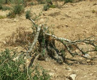 vandalized tree